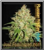 Best Automatic White Russian #2 Cannabis Seeds